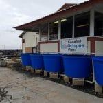 kanaloa octopus farm