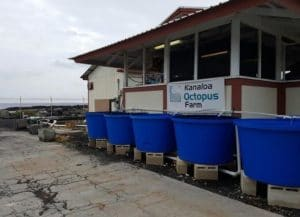kanaloa octopus farm